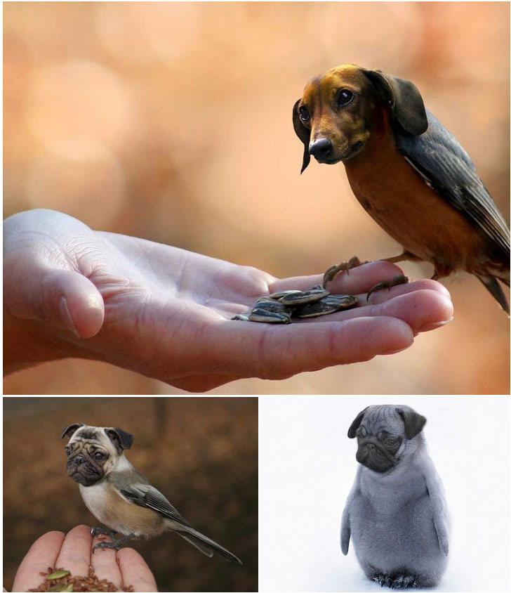 Dirds (dogs + birds) (3)