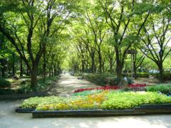 240px-Utsubo_park.jpg