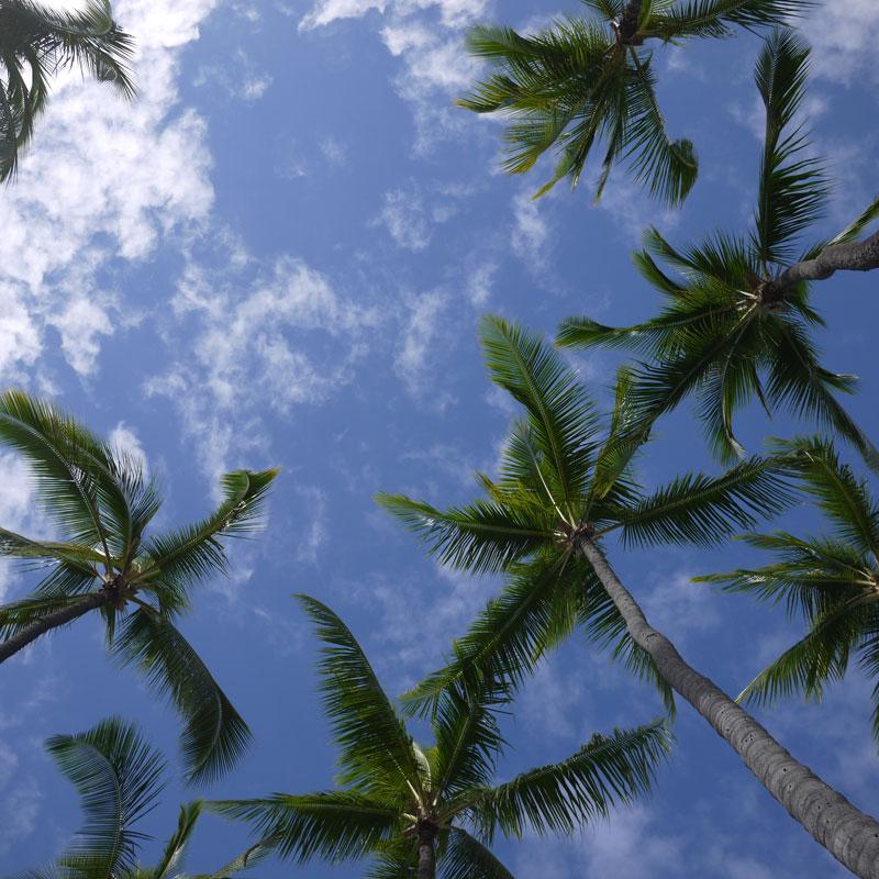 HAWAII 旅行記 (35)