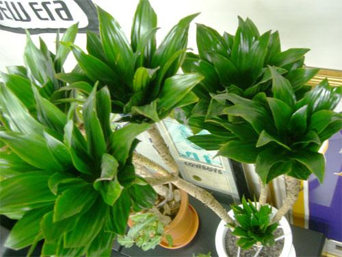 First Staff Blog-観葉植物