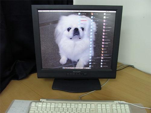 First Staff Blog-PC壁紙