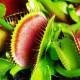 知らん間に増えてた観葉植物、、早くも召されてます